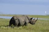 black-rhino-03