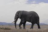 elephant-01