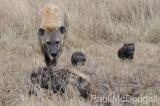 hyena-07