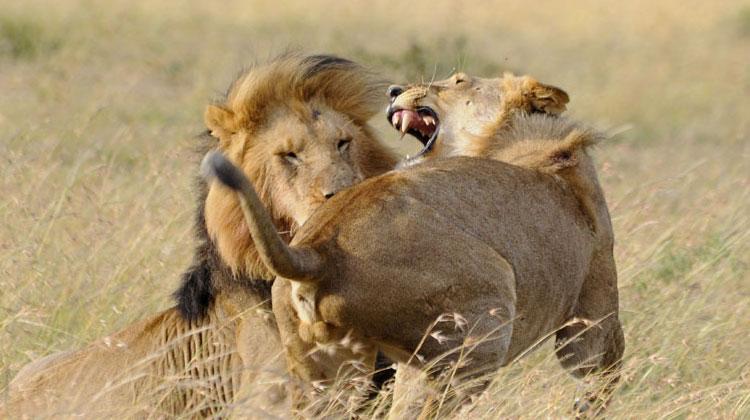 Paul McDougall - Lions