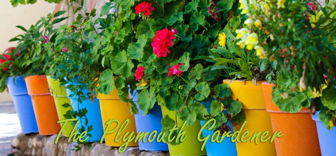 plymouth gardens