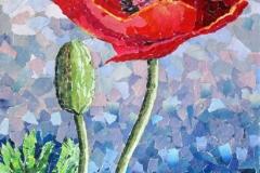 Oriental-poppies