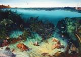 Cuttlefish-Gulley