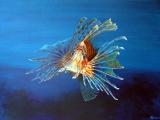 Lionfish-main