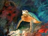 Secret-Turtle
