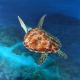 Turtle-Away