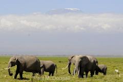 elephant-04