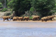 elephant-14