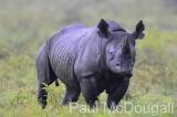 black-rhino-01