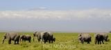 elephant-05