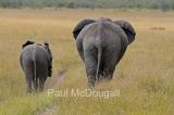 elephant-07