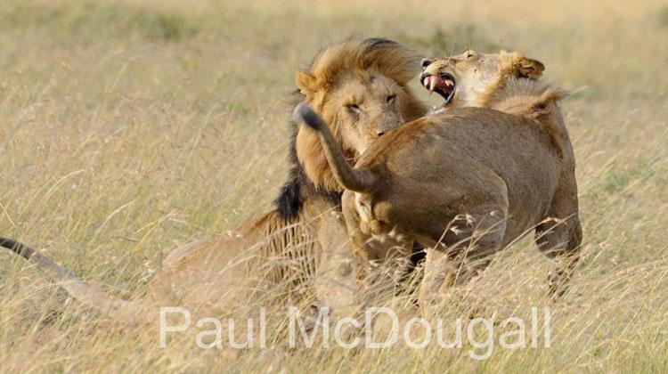 Photographer Paul McDougall
