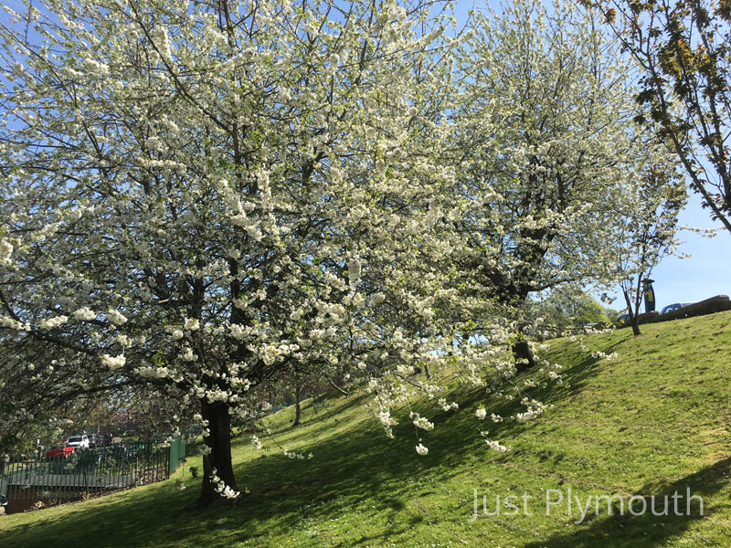 Plymouth in Bloom